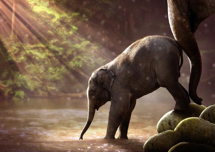 0_elefant