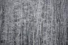 Havazás Veszprém megyében