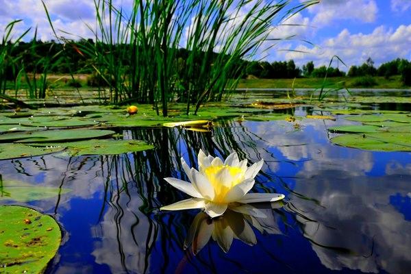 Hasznos tippek kerti tó telepítéséhez