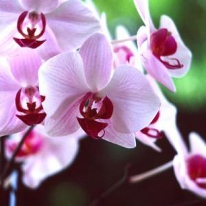 A legszebben virágzó dísznövények