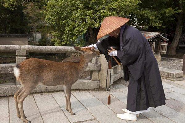 Őzpark Japánban