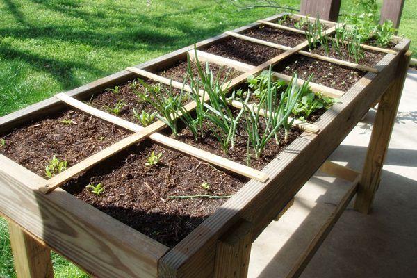 Négyzetméteres kertészkedés