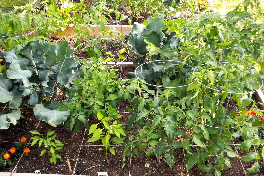 Ládakertészet, avagy a  négyzetméteres kertészkedés alapjai
