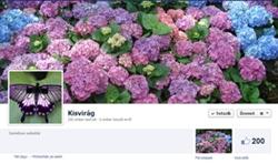 Major Virág Facebook