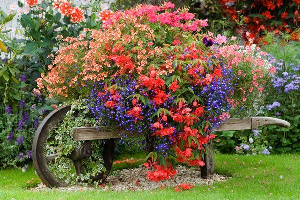 Virágok kert