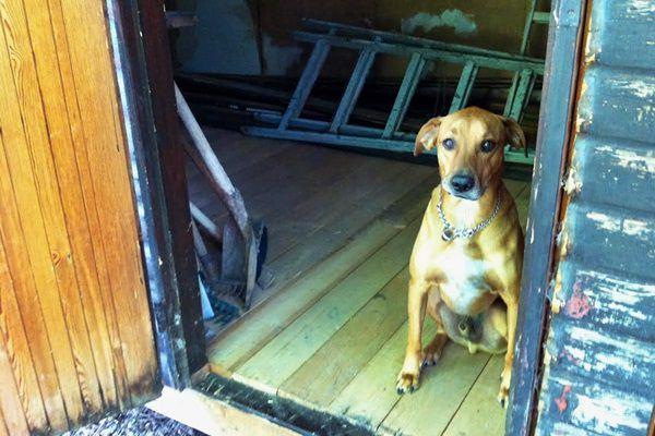 Nelli kutya