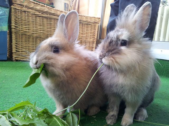 rabbit-652329_640