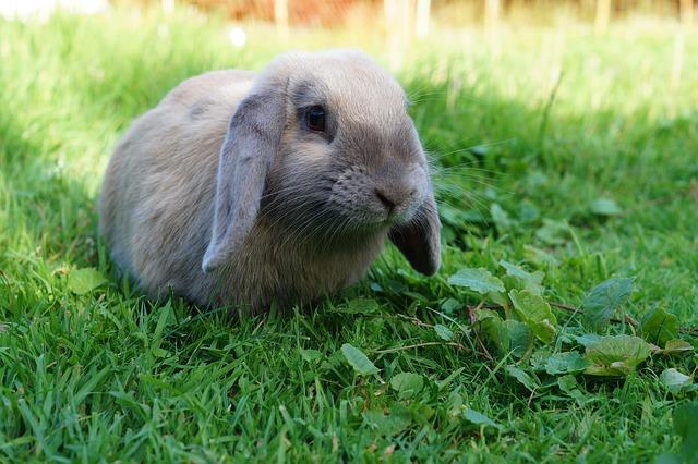 rabbit-882663_640
