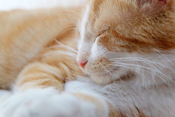 5 dolog, amit nem hittem el a macskákról, amíg nem lett egy sajátom