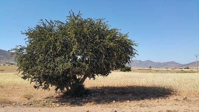 morocco-827830_640