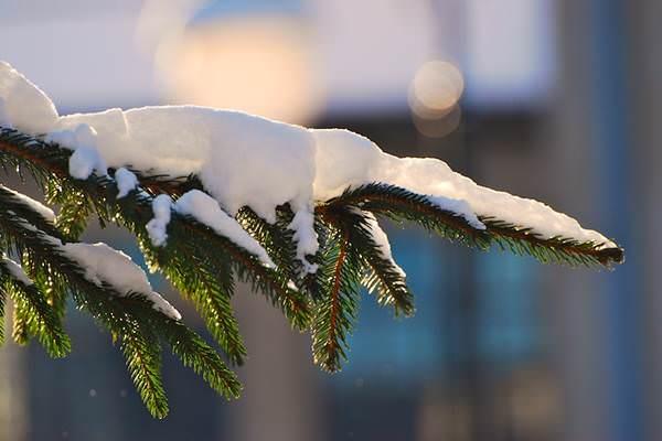 Hó karácsony fenyő