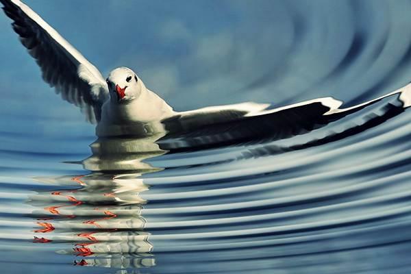 Lélekhajó madár