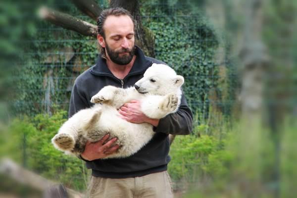 Knut és Thomas Dörflein végzete. A legjövedelmezőbb jegesmedve története