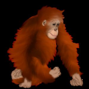 """Lala egy szumátrai orangután, a Főemlősök rendjéből, az Emberfélék családjából, az Orangutánok neméből, tudományos nevén: """"Pongo abelii"""" (Ejtsd: """"Pongó abeli"""")."""