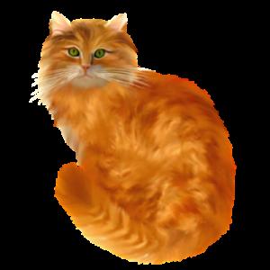 KICSODA Ő? Mia egy házimacska. Tudományos nevén Felis silvestris catus (Így ejtsd: Felísz szilvesztrisz katusz.) Az a macska, akit mi is ismerünk háziállatként. Mia cica a cirmos cicák közé tartozik, ők a leginkább javasoltak otthoni tartásra. A régebbi rendszertan szerint ő a közönséges vagy európai házimacska