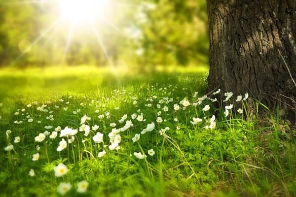 Lélekhajó virág tavasz