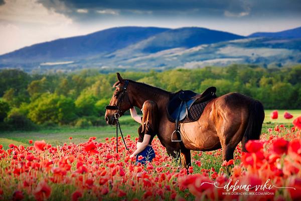 ló virág táj