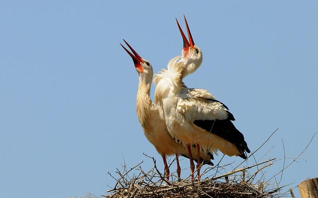 stork-1205411_640