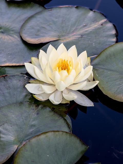 flower-1353752_640