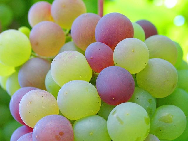 grape-1089376_640