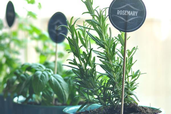 indoor-herb-garden-free-printables600