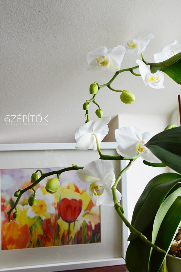 orchidea2017_1