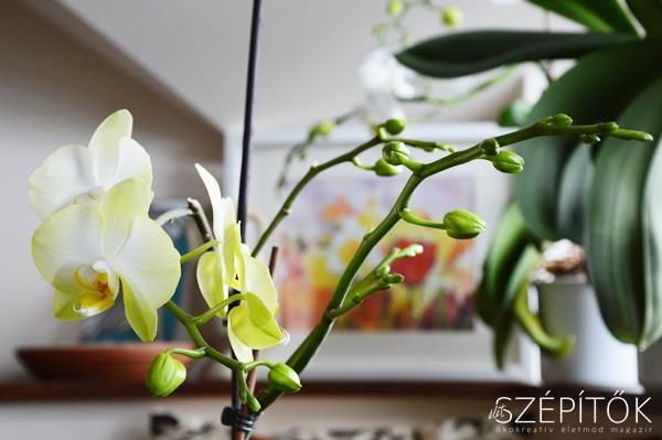 orchidea2017_3