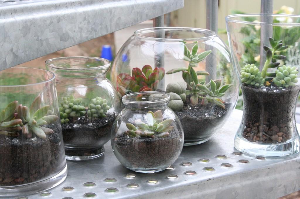 seedtostembotanicalsnet