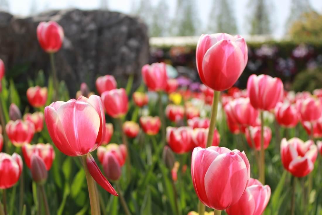 Hogyan kezdj neki a kerted megtervezésének, átalakításának? 2. rész