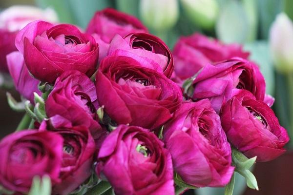 Flóra istennő köszöntése, a Szentlélek kiáradása, királyok és királynők: itt a piros pünkösd napja!