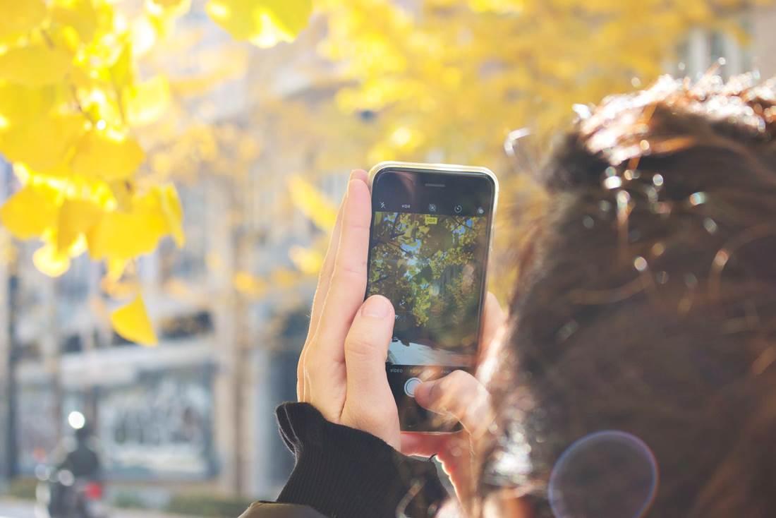A PlantNettől a Fa Bookig. Három remek növényhatározó mobilalkalmazás. Saját fotó alapján is beazonosíthatók a növények